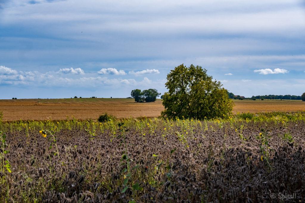 Felder auf Rügen